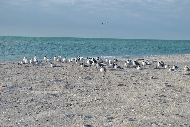 Lots of birds to see on Dauphin Island!